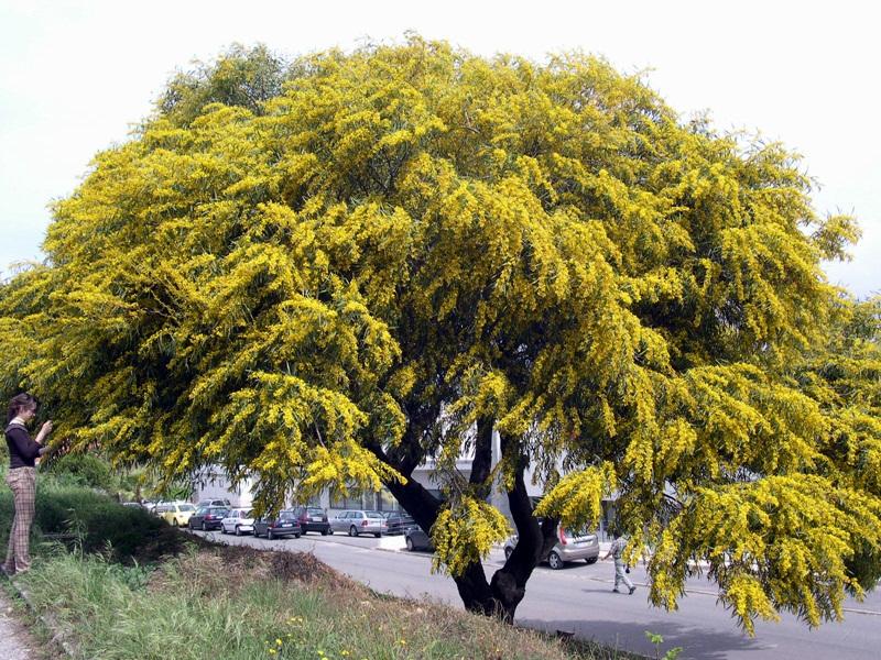 Aspeto geral da planta em floração.