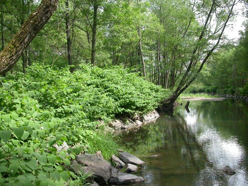 Área invadida junto a uma linha de água.