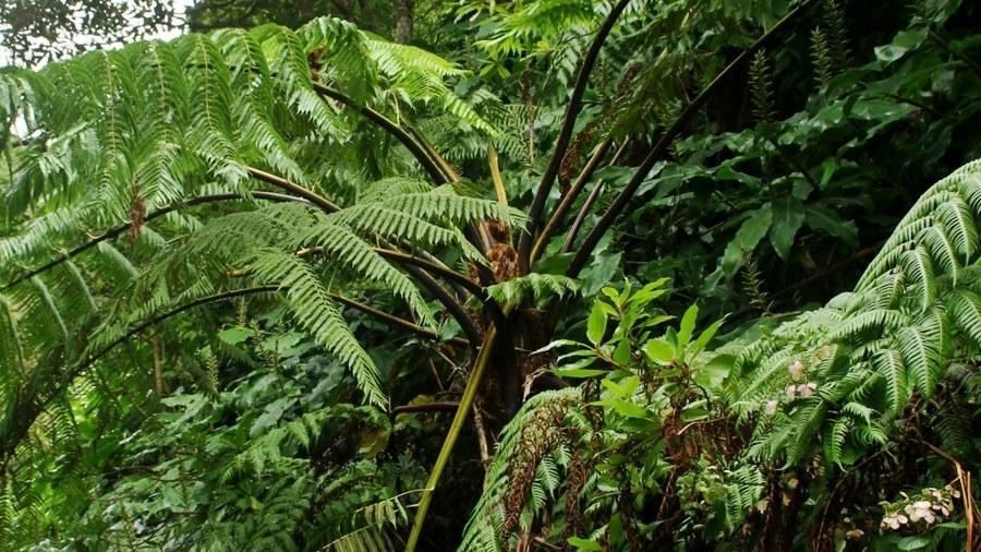 Aspecto geral da planta. Foto de SPEA Açores.