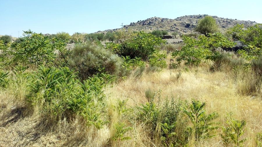 Área invadida em ambiente natural.