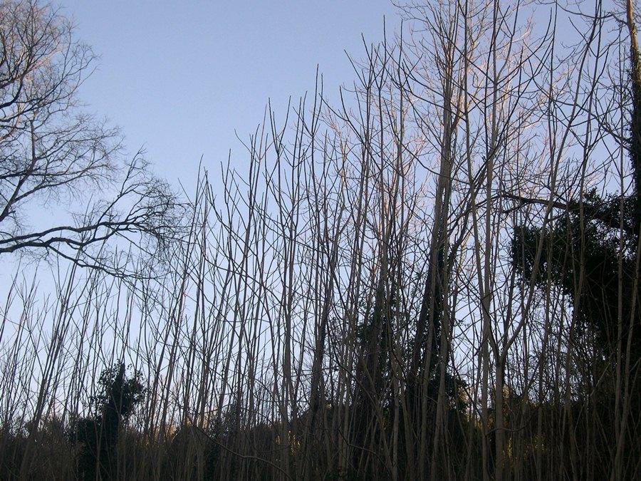 Aspeto das plantas durante o outono/ inverno.