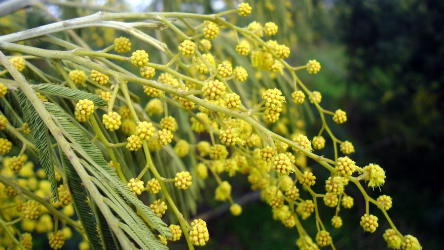 Gemas florais. | Flower buds.