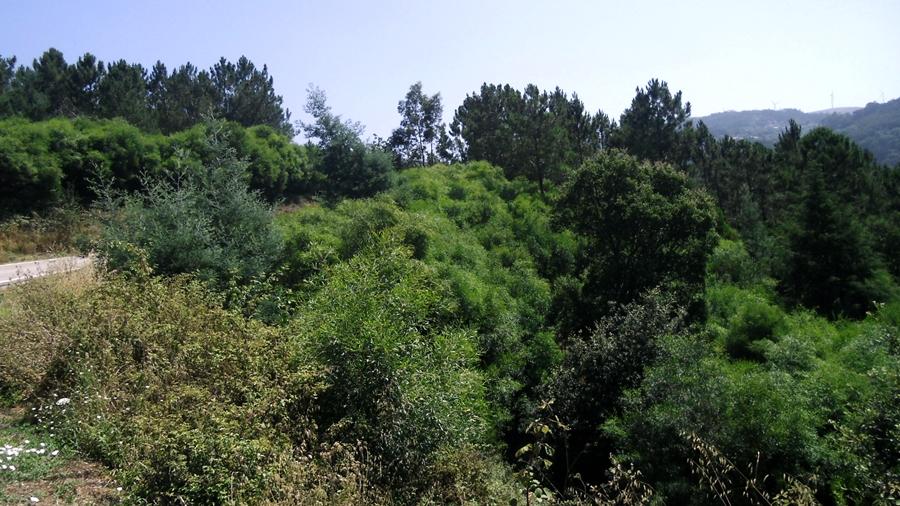 Área invadida (verde mais claro e vivo).